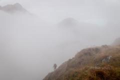 Spannung im Nebel