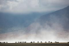 Staubdahnen über dem Salzsee im Ngorongoro