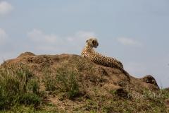 Relaxter Gepard