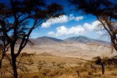 Schirmakazien auf dem Weg zur Serengeti