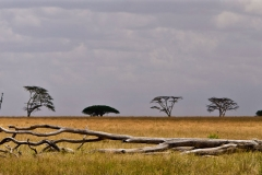 KiliSerengeti2012_83