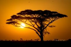 Wikinger Blog Kilimanjaro2018 (103 von 127)
